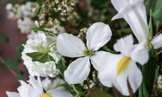 *****flower3botanical_watercolor_jeffords21